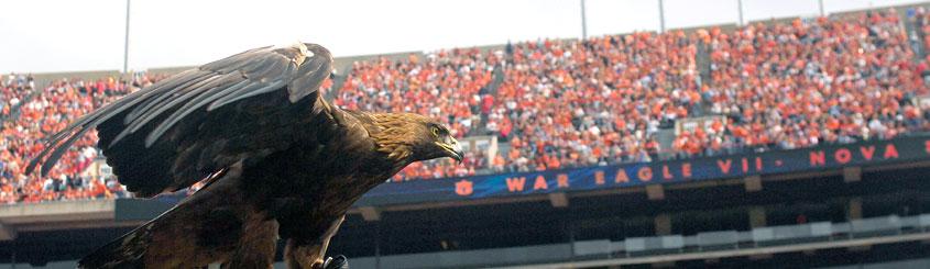 Auburn War Eagle